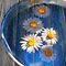Daisies and water by Veikko  Suikkanen