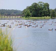 Sitting Ducks by zpawpaw