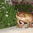 Territorial Toad, Bermuda by Amaterasu
