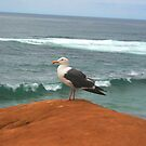Seaward Seagull  by heatherfriedman