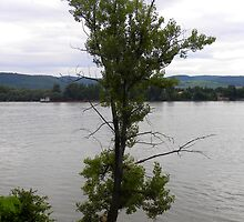 Lonely tree at the Danube-bend,town Zebegeny,Hungary by ambrusz