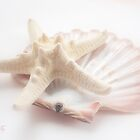 Seashell 3 by aMOONy