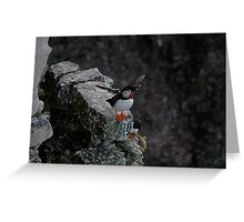 A Puffin.  having a flap. Greeting Card