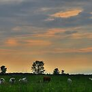 Grazing in the Fields by Michael Kelly