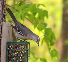 Mocking Bird the State bird of Arkansas by Susan Blevins