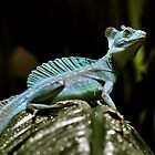 Green Basilisk Lizard by Dennis Stewart