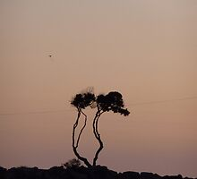 Trees of Life at Sunset- Newport Beach, CA by Alima  Ravenscroft