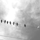 b&w birds on a wire by shannonybaloney