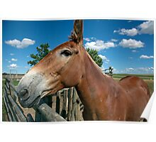 Mule From 1880 Town Poster