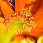 Diving Into Orange by artistjanebush