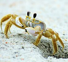 Love Crabs by Paulette1021
