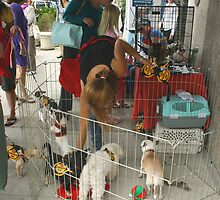 S.N.A.P. Adoption Event by heatherfriedman
