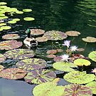 Lily Pond with Strolling Duck by Landscapes Mainly .
