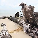 Drift-Wood - on Moreton Island by Bami