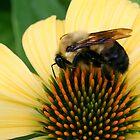 Makin' Honey by Laurel Talabere