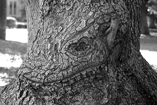 Face of oak by David Lee Thompson