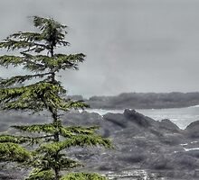 Wind Blown Inlet by Bob Webb