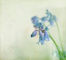 Grunge Bluebell by Jill Ferry