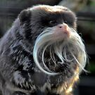 A Day at the Zoo - Trimming Your Moustache ( 1 ) by Larry Lingard-Davis