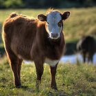 COW! by clydeessex