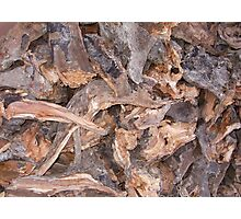 Woodpile in Winter Photographic Print