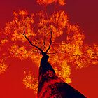 Fire by Tony Steinberg