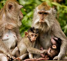 Macaca Moms & Sons by Franky Lie