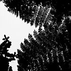Leaf Silhouettes, Mt Merapi, Java, Indonesia by Ashlee Betteridge