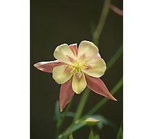 Faery Flower! Photographic Print
