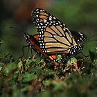 Monarch Mates by Elaine  Manley