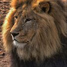 A Day at the Zoo - Gods Greatest Creation ( 4 ) by Larry Lingard-Davis