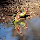 Eastern Rosella by Kerryn Ryan, Mosaic Avenues