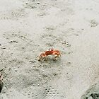 crabs by brian hammonds