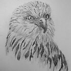 RED KITE by GEORGE SANDERSON