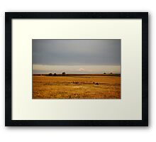 Paint Horse in Autumn Framed Print