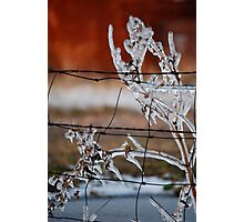 Ice on Weed Photographic Print