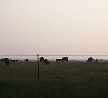 Cows at Twilight Hour by KaylaKarma