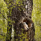 Great-Horned Owlet in Gros Ventre Campground by cavaroc