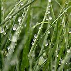 Water Grass Mines by David Bobrick