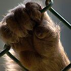 Untitled Japanese Monkey by Diana Mankowski