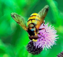 Bee On Flower 0042 by mike1242