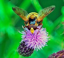 Bee On Flower 0043 by mike1242