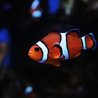 I'm not Nemo, so Stop Asking. by Brandi Lea