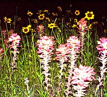 Wild Flowers, Wild Night by Dr. Charles Taylor
