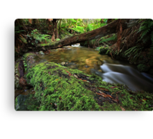 """From the Log"" Canvas Print"