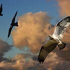Defending the Nest by byronbackyard