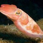 Reaper Cuttlefish, Sydney Harbour by Erik Schlogl