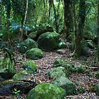 Mossy Boulders - Springbrook N.P by Jordan Miscamble