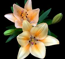 lily with two flowers on black by Anastasiya Smirnova