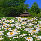Pushing Up Daisies by Brian Gaynor